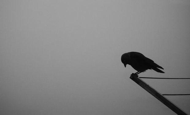 sad-bird1