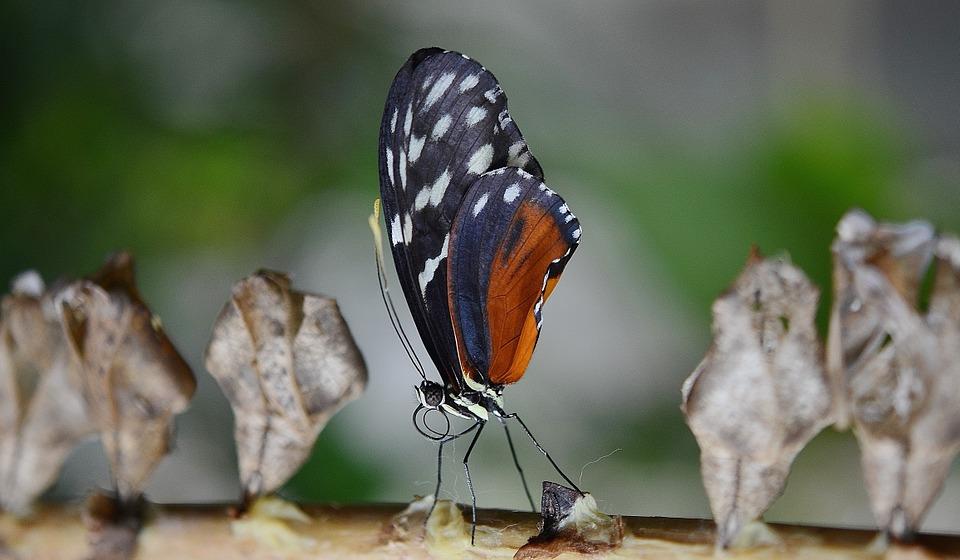 butterfly-612208_960_720